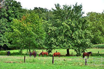 Paardenweide 1 van Edgar Schermaul