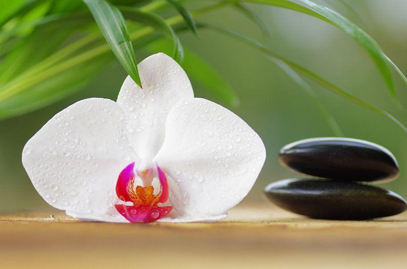orchideeën Paradis van Tanja Riedel