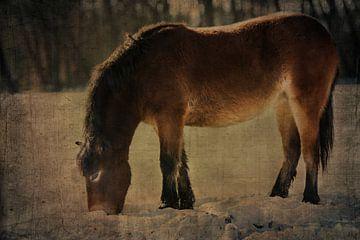 Exmoor Pony von Anouschka Hendriks