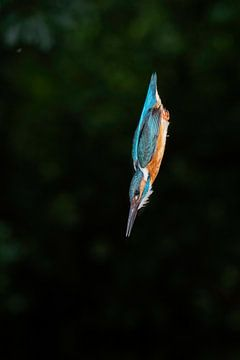 IJsvogel van Larissa Rand
