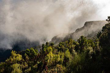 Laurissilva, oerbossen op Madeira van Melissa Peltenburg