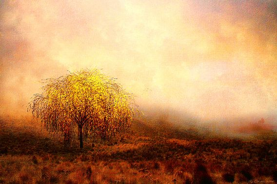De wilgenboom van Jacq Christiaan