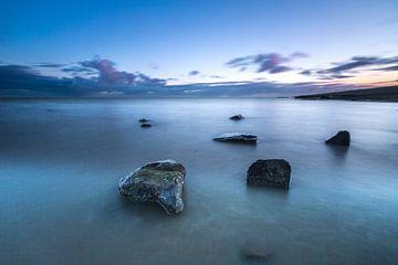 Weedwad dans la mer des Wadden sur AGAMI Photo Agency