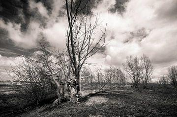 Black & white von Davy Reitsma