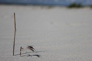 Tak met veertje op het strand van Terschelling van Nynke van der Ploeg