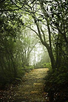 Pfad und Stufen in einem nebligen, mystischen Wald. china, Zhangjiajie National Forest Park von Michael Semenov