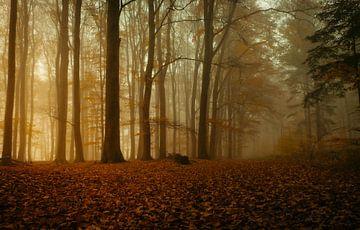 Mist in het bos van Jeroen te Lindert