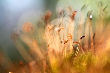 Mousse en fleurs dans la forêt sur Ad Jekel