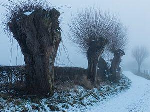 Weggetje met sneeuw en mist en met knotwilgen
