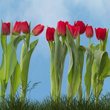 Tulpen ist Frühling von Klaartje Majoor