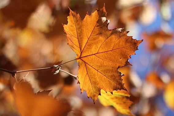 The Orange Leaf III