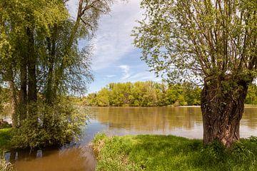 bomen langs een rivier in de zomer von Bernadet Gribnau