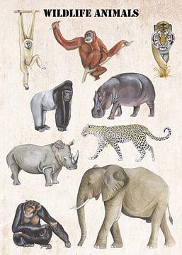 Wildlife Animals van Jasper de Ruiter