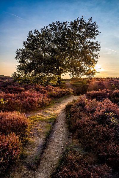 Posbank Sunset 1 van Joram Janssen