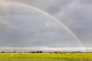Regenboog over de omliggende weilanden van Dorkwerd / 2013