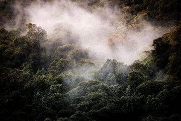 forêt nuageuse sur Jeroen Mikkers