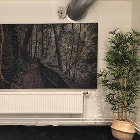Kundenfoto: Waldspaziergang in Tasmanien von Eveline Dekkers
