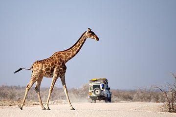 Giraffe steekt de weg over nadat safari auto is gepasseerd van Arjen van den Broek
