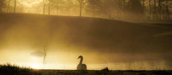 Zwanen in de mist van Dirk van Egmond