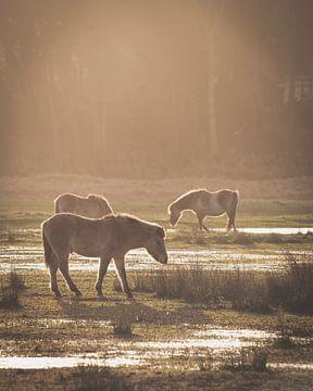 Pferde bei Sonnenuntergang von Sander van Driel
