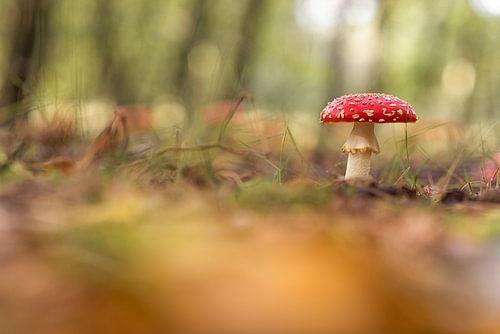 herfst kleuren. paddenstoel.