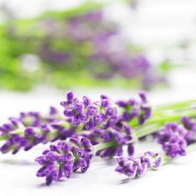 Summer Lavender Still Life sur Tanja Riedel
