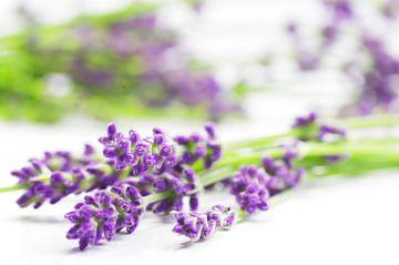 Summer Lavender Still Life sur