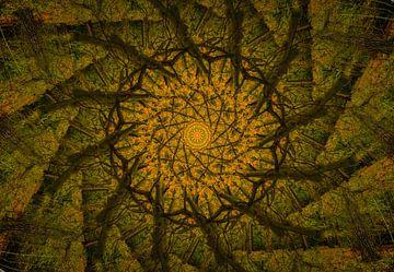 Kaléidoscope d'un chêne sur René van der Horst