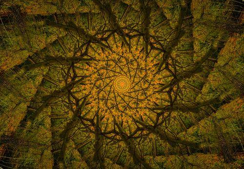 Kaléidoscope d'un chêne