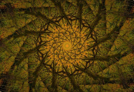 Kaleidoscoop van een eikenboom