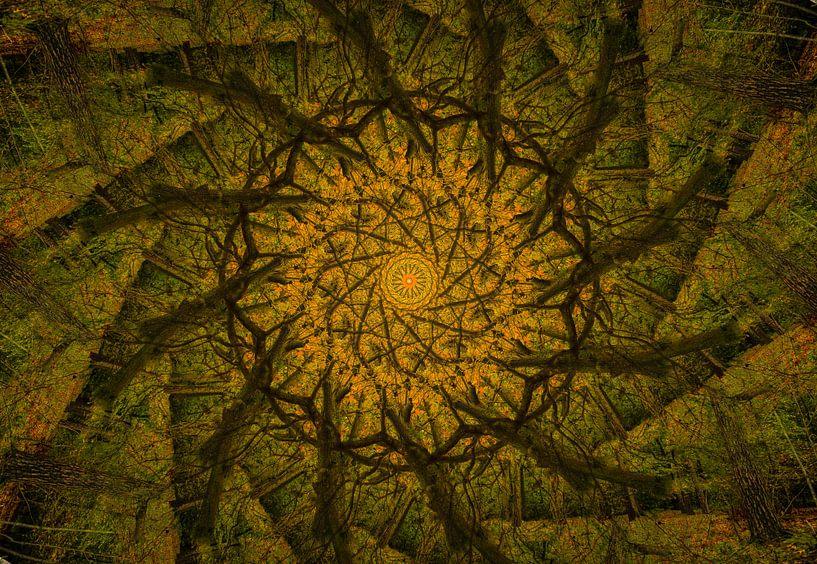 Kaleidoscoop van een eikenboom van René van der Horst