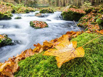 Bladeren op een rivier in de herfst van Animaflora PicsStock
