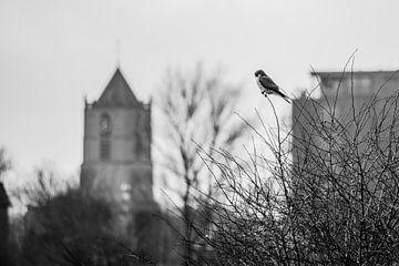 bird of church  van claes touber