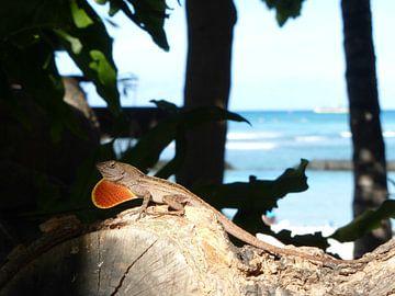 Hawaiian lizards van Janina Ballali