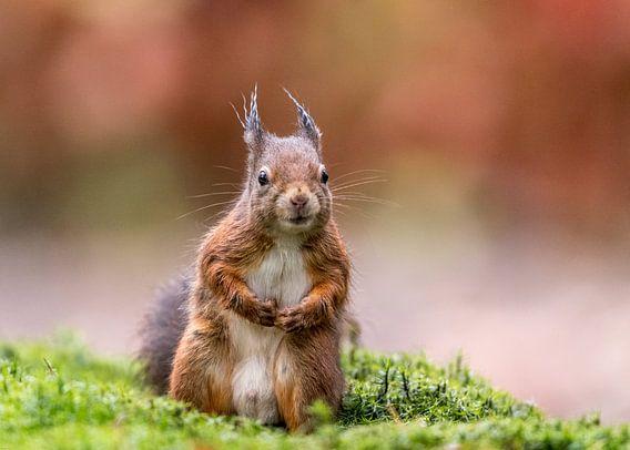 Nieuwsgierige eekhoorn in herfst setting!