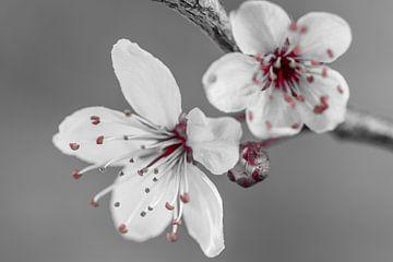 Blüte von Marianne Twijnstra-Gerrits