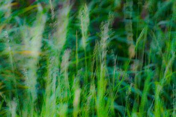 Abstraktes Gras von Niek Traas