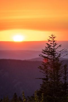 Sonnenuntergang mit einem Baum in den Bergen von Jordy Blokland