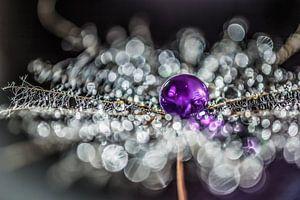 Pluis met paarse drup van
