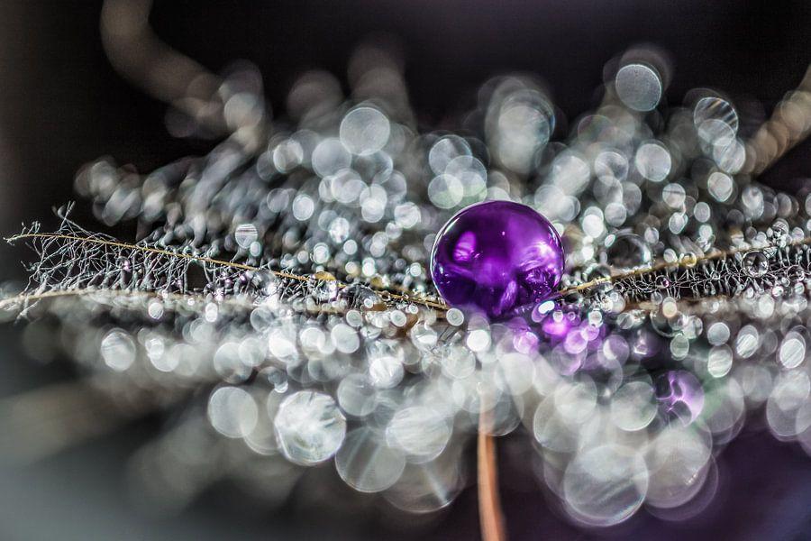 Pluis met paarse drup van Bert Nijholt