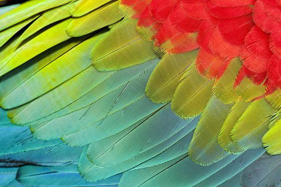 Kleurrijke Groenvleugelara vleugel