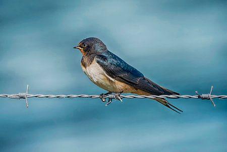 Eén zwaluw maakt nog geen zomer van Amsterdam Fotografie (Peter Bartelings)