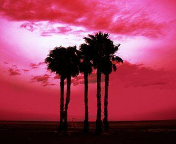 Palmbomen en voetbal van Harrie Muis