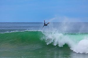 Surf @ Fly