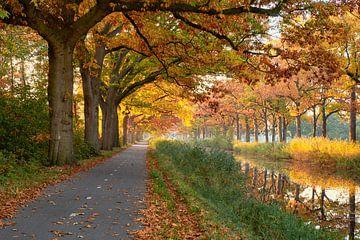 Gouden herfst langs het Apeldoorns Kanaal van