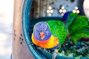 Neugieriger kleiner Vogel von hugo veldmeijer