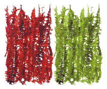 Feuilles de plantes vertes et rouges sur Eva van den Hamsvoort