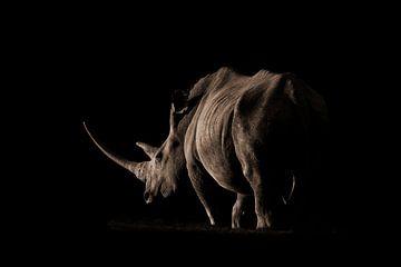 Neushoorn in de avondzon van De Afrika Specialist