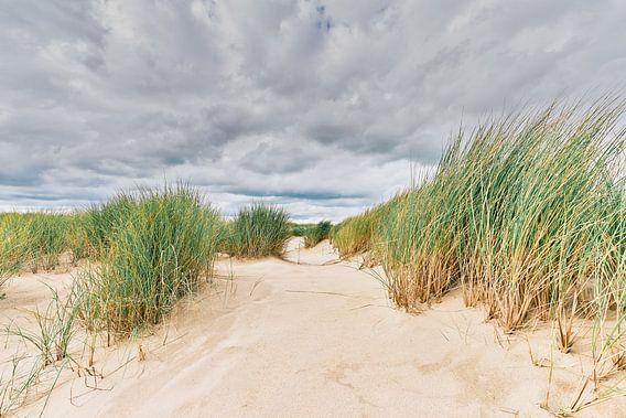 Het Nederlandse landschap met het beeld van de duinen
