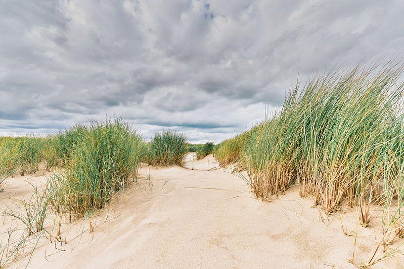 Het Nederlandse landschap met het beeld van de duinen van eric van der eijk